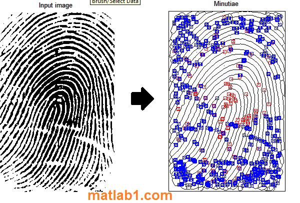 Fingerprint minutiae extraction matlab code
