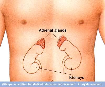 AdrenalGlands