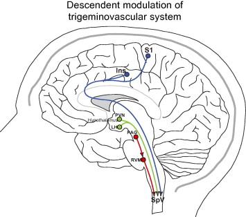 Hypothalamic Descending Modulation of Trigeminovascular Pain