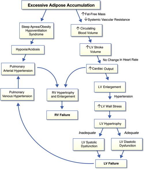 Figure 2. Pathophysiology of Obesity Cardiomyopathy