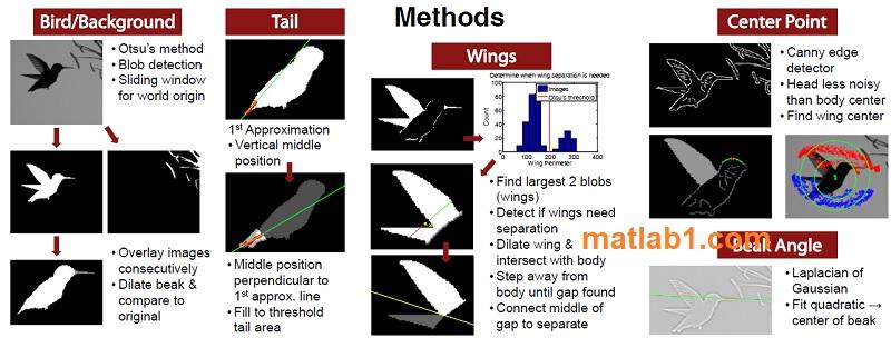 Hovering Hummingbird Automated Segmentation Feature Tracking
